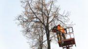 Министерство энергетики Московской области: о компенсационных посадках деревьев