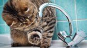 Красногорск вступает в период отключений горячей воды. Как быть?