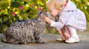 В Красногорске годовалый малыш едва не потерял руку из-за кошачьих «царапок»