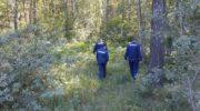 Из лесов Московской области с начала года вывели уже более 300 заблудившихся